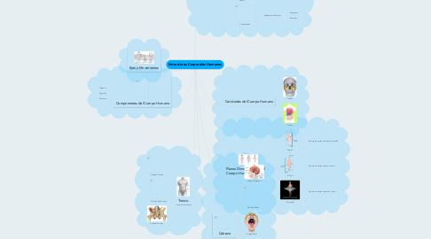 Mind Map: Estructuras Corporales Humanas