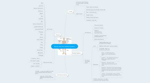 Mind Map: Bones and the skeletal system