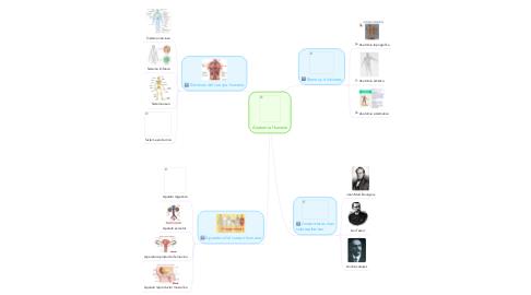 Mind Map: Anatomía Humana