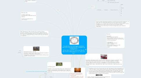 Mind Map: Hvordan kan man undersøge et didaktisk fænomen med udgangspunkt i deltagelse og tingsliggørelse? Tryk på 'plus' øverst til venstre og tilføj dine ideer. Du kan tilføje billeder m.m. i menuen til højre.