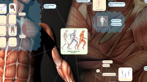 Mind Map: Aspectos Anatómicos Humanos