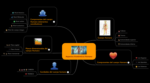 Mind Map: Aspectos Anatómicos Humano