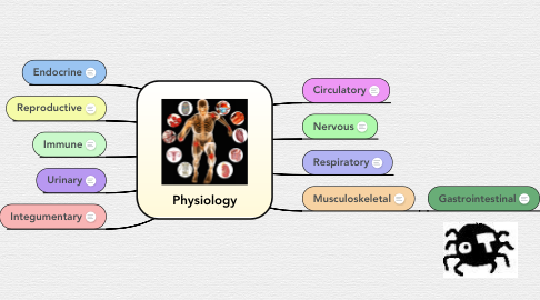 Mind Map: Physiology