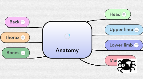 Mind Map: Anatomy