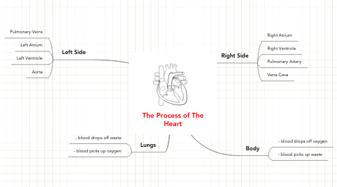 Mind Map: The Process of The Heart