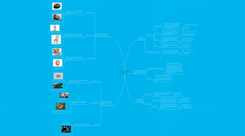 Mind Map: Form & Function