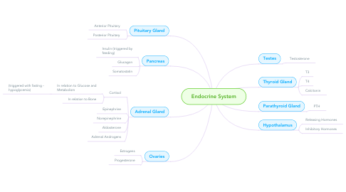 Mind Map: Endocrine System