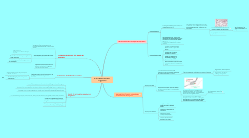 Mind Map: le fonctionnement de l'organisme