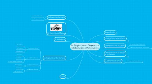 Mind Map: La Respiración en Organismos Multicelulares y Pluricelulares