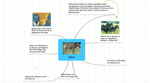 Mind Map: Zebra