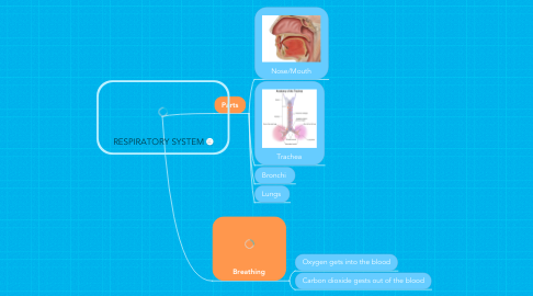 Mind Map: RESPIRATORY SYSTEM