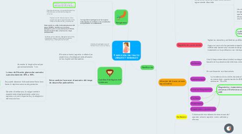 Mind Map: INFECCIÓN DEL TRACTO URINARIO Y EMBARAZO