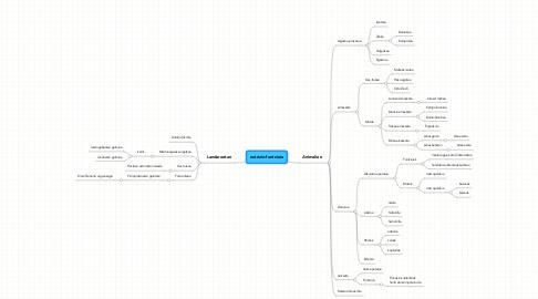 Mind Map: nutrizio-funtzioia