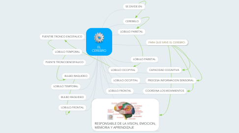 Mind Map: EL CEREBRO