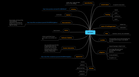 Mind Map: lyre bird