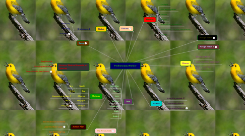 Mind Map: Prothonotary Warbler