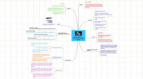 Mind Map: BELUGA WHALES       DELPHINAPTERUS LEUCAS ALSO NAMED AS THE SEA CANARY