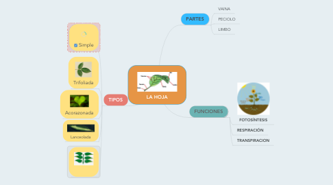 Mind Map: LA HOJA