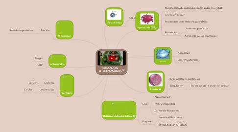 Mind Map: ORGÁNULOS CITOPLASMÁTICOS