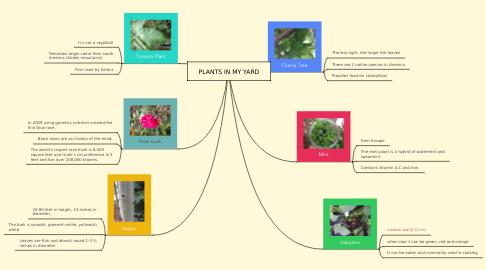 Mind Map: PLANTS IN MY YARD