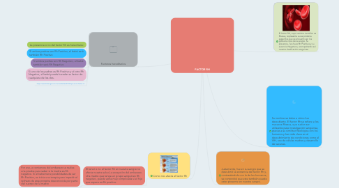 Mind Map: FACTOR RH