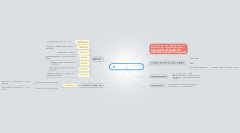 Mind Map: MORFOLOGIA DENTAL