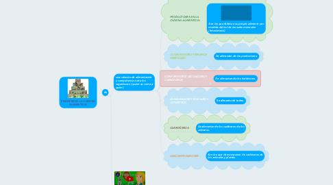 Mind Map: PIRÁMIDE DE LA CADENA ALIMENTICIA