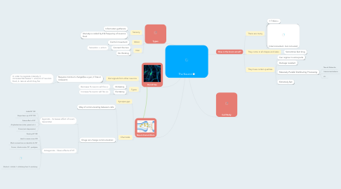Mind Map: The Neuron