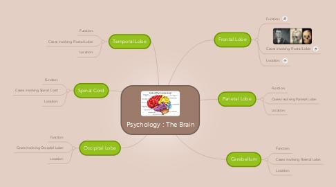 Mind Map: Psychology : The Brain