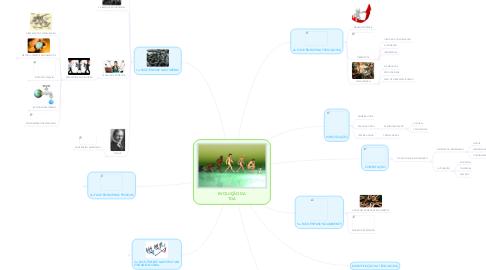 Mind Map: EVOLUÇÃO DA TGA
