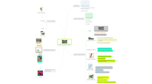 Mind Map: AGRICULTURA EN COLOMBIA