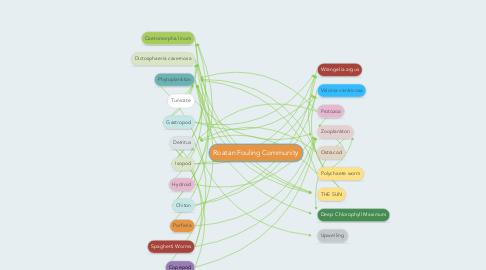 Mind Map: Roatan Fouling Community