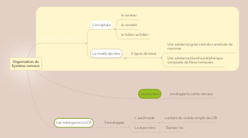 Mind Map: Organisation du Système nerveux