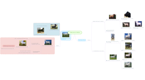 Mind Map: TERRA MIA B-FRIEDA