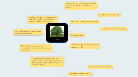 Mind Map: Oak