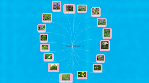 """Mind Map: Екскурсія """"Різноманітність рослин свого краю"""". Перші весняні трав′янисті рослини"""