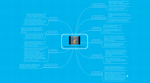 Mind Map: Margarita sistema digestivo