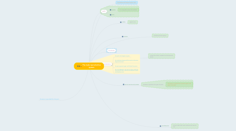 Mind Map: The male reproductive system