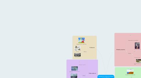 Mind Map: Transporte y efecto de tóxicos en el ambiente