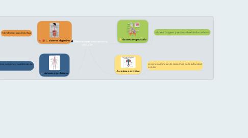 Mind Map: Sistemas que intervienen la nutrición