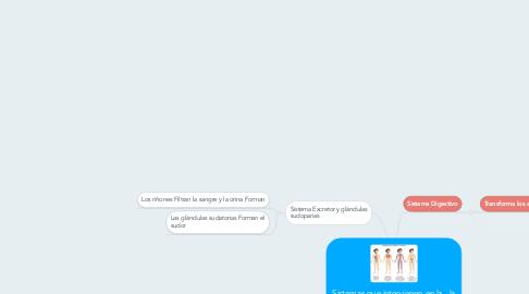 Mind Map: Sistemas que intervienen en la  la nutrición humana