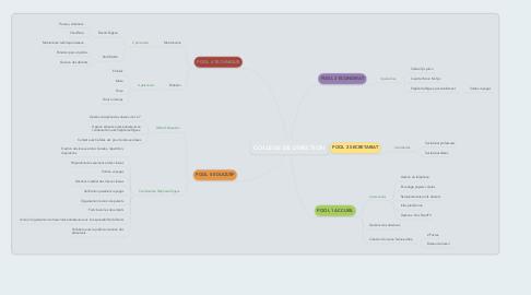 Mind Map: COLLEGE DE DIRECTION