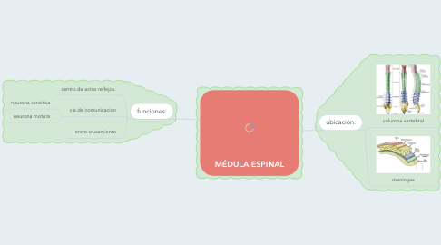 Mind Map: MÉDULA ESPINAL