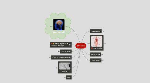 Mind Map: גוף האדם