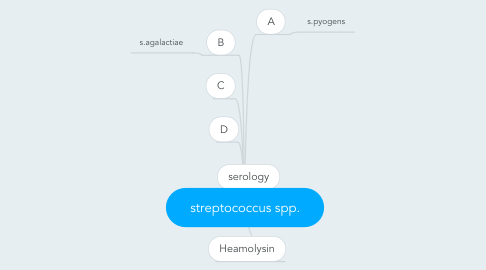 Mind Map: streptococcus spp.