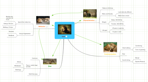 Mind Map: Lion