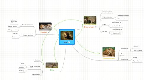Mind Map: Lion
