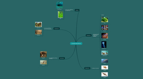 Mind Map: LAS ERAS GEOLOGICAS