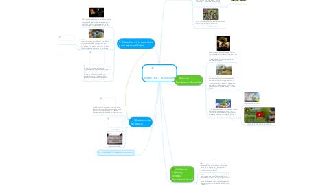 Mind Map: AMBIENTE Y BUEN VIVIR