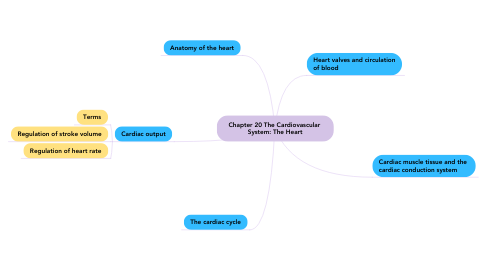 Mind Map: Chapter 20 The Cardiovascular  System: The Heart